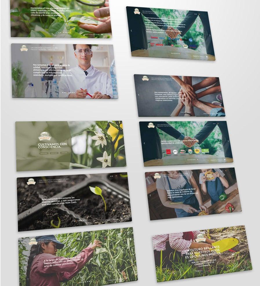 Diseño-de-páginas-web-en-Puebla